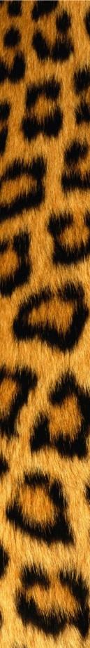 leopard-skin-tall