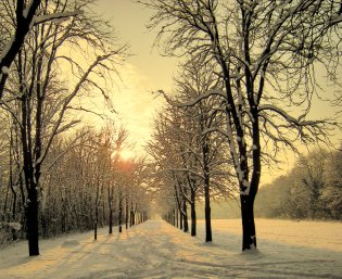 Snowy tree-lined road at sunrise.